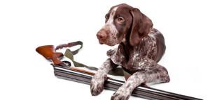 hunting-dog-breeds